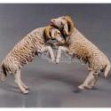 Corderos peleando