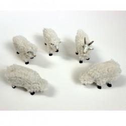 Cabras y ovejas con lana