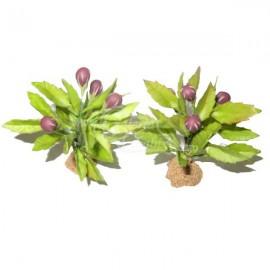 Planta de Berenjenas